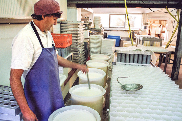 our-work: Cheesemaker Charlie Westhead cutting the curds