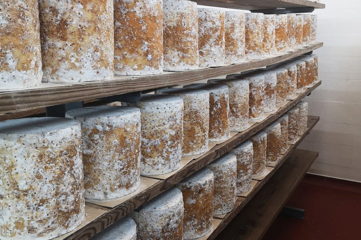 our-work: Colston Bassett Stilton in the maturing arches at Colston Bassett Dairy