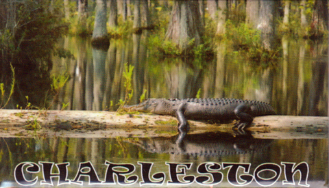 Charleston Alligator Magnet