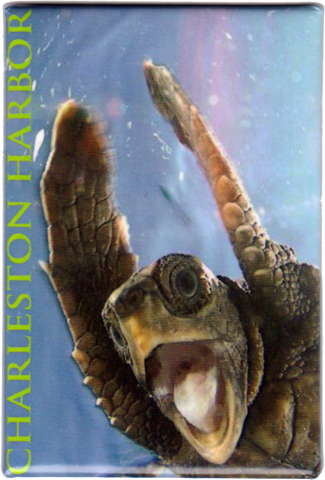 Charleston Harbor Sea Turtle Magnet