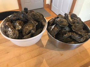 Wellfleet Oysters from Shawn Rose of Main Street Shellfish Company
