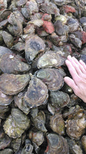 Load image into Gallery viewer, Wellfleet Oysters Brent Valli & Sandra Mitchell of Wellfleet Oyster Company
