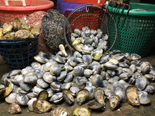 Load image into Gallery viewer, Wellfleet Oysters, Littlenecks & Cherrystones from Evan Bruinooge of Outta Bed Oyster Company