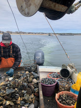 Load image into Gallery viewer, Wild Wellfleet Oysters, Littleneck & Cherrystone Clams from Dave Seitler of CCB11 Fisheries