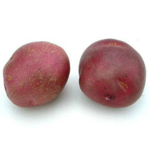 Red Potato - Farmhouse-Primitives