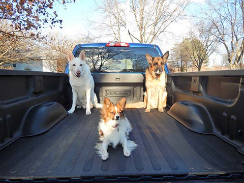 Dogs in a truck bed protected by a Dual Liner