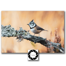"Load image into Gallery viewer, ""Crestie"" -  Photographic Print"