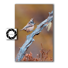 Load image into Gallery viewer, Mini Photographic Prints