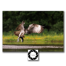 "Load image into Gallery viewer, ""Gotcha"" - Fine Art Print"