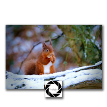 Load image into Gallery viewer, In the Snow - Photographic Print