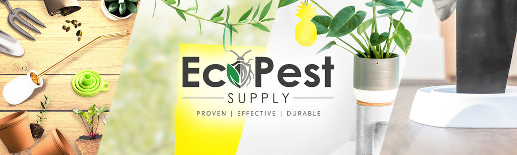 eco friendly pest control insect traps