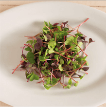 Load image into Gallery viewer, Microgreen Superfood Subscription