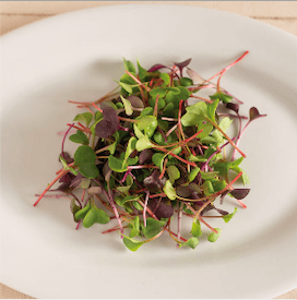 Microgreen Superfood Subscription