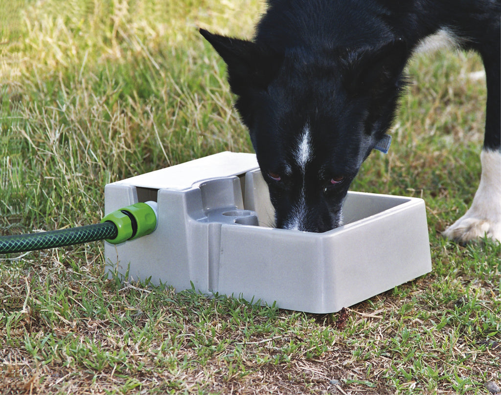 Bainbridge Automatic Pet Waterer