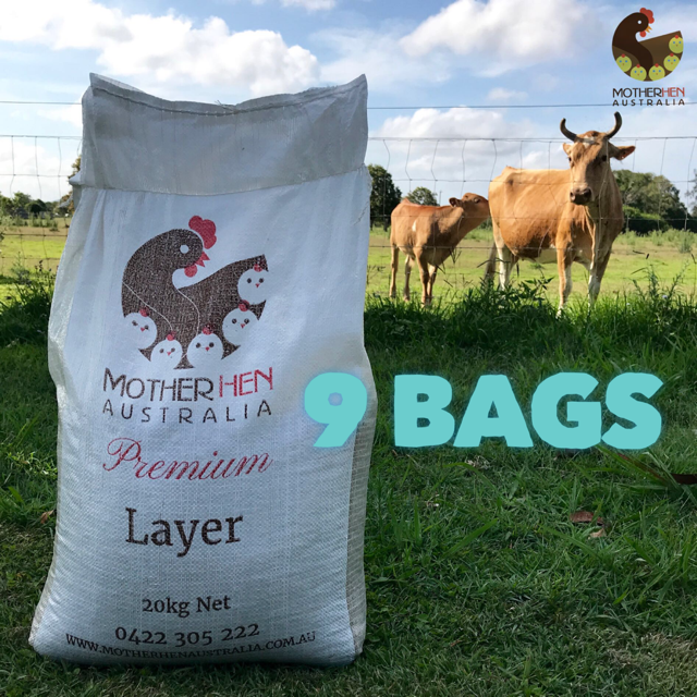 PREMIUM LAYER 9 Bags Bulk Price (Free Local Delivery)