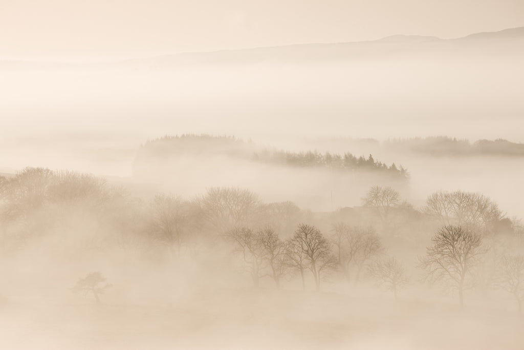 Beautiful sepia type photograph of misty trees in a lowland Scottish Landscape