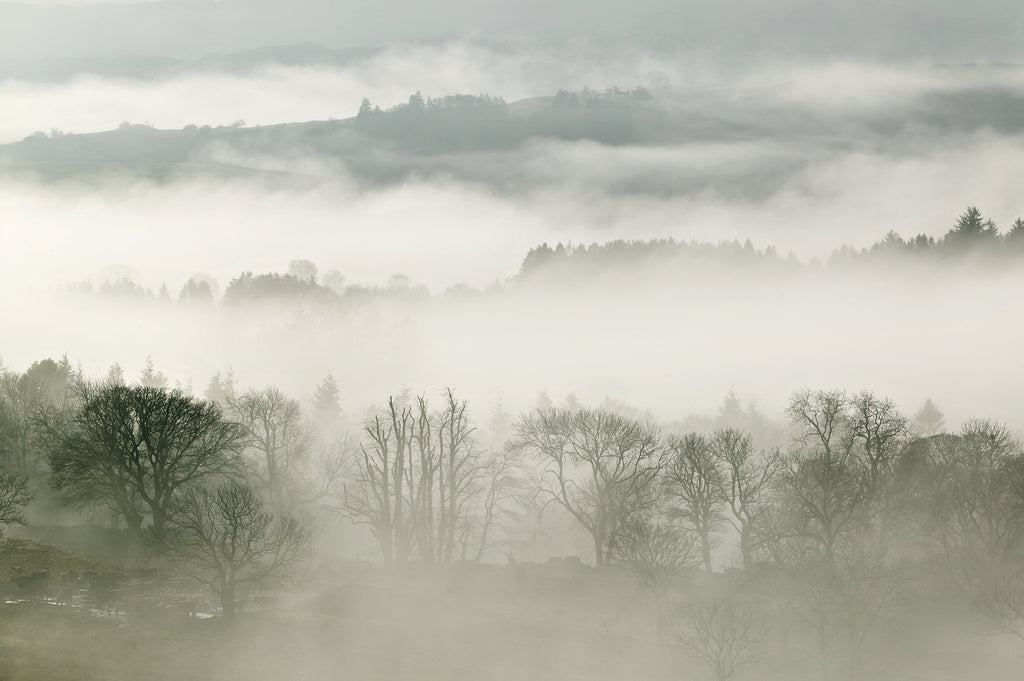 Wintry leafless trees shrouded in mist on an upland Scottish hillside