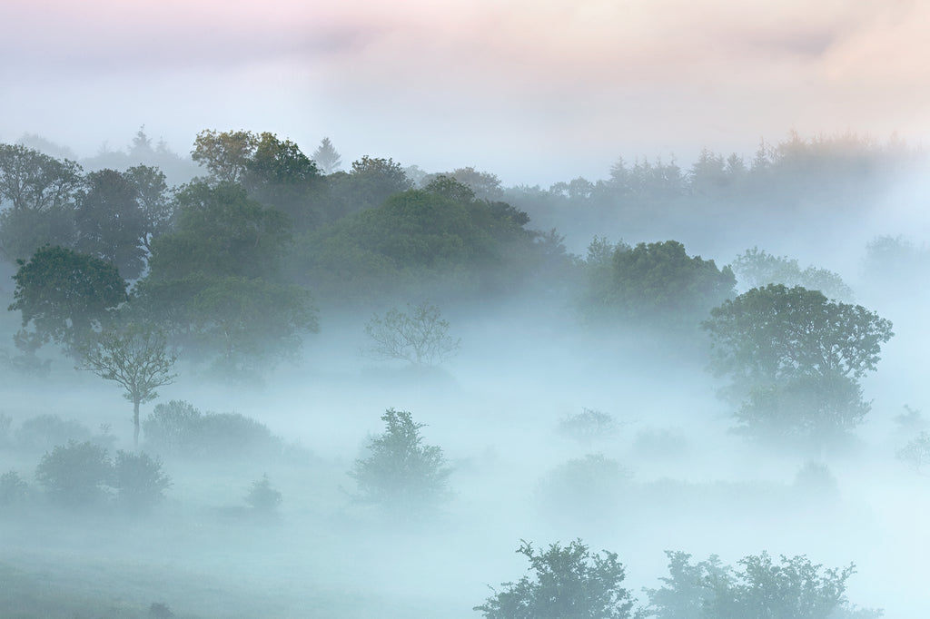 Luscious photograph of leafy summer trees shrouded in mist with green and pink tones