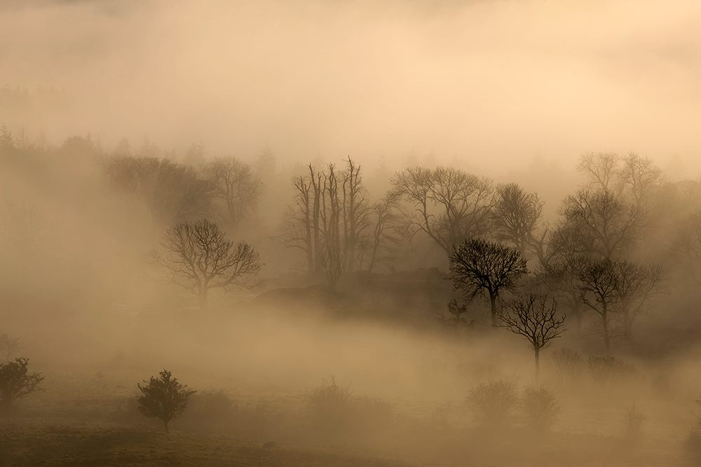Beautiful misty landscape photograph in sepia tones with a variety of bare broadleaf trees shrouded in fog