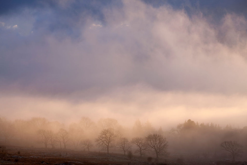 Romantic landscape photograph showing misty trees transfused with sunlight and a blue sky above