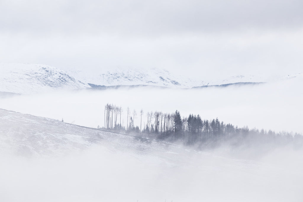 Snowy Scottish landscape scene in blue tones, with mountains glimpsed through mist and conifer plantations trees, some of which have blown down in a storm