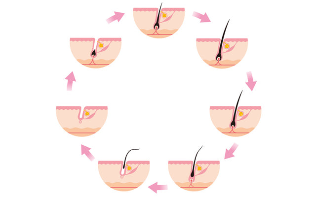 Hair Growth Cycle: Understanding The Structure Of Your Follicles