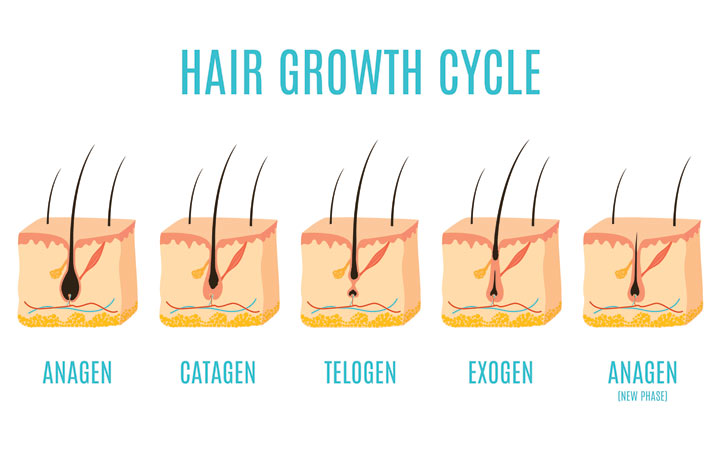 hair growth cycle step by step