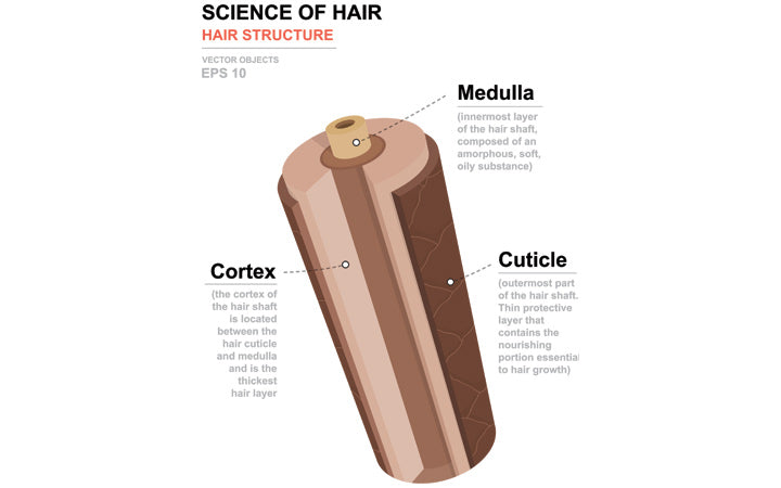 science of hair