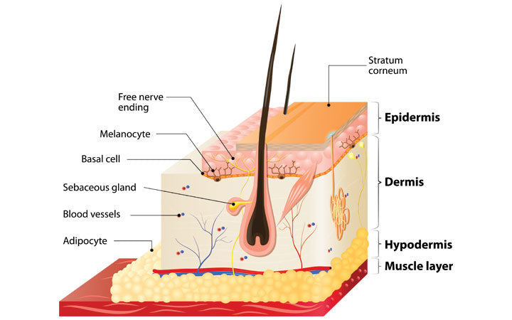 layers of human hair