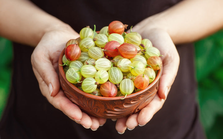 bowl of gooseberries for juice