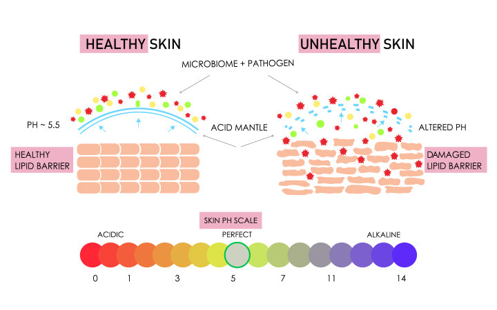 healthy and damaged skin building vector comparison