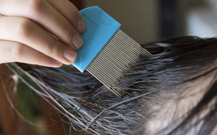 treating head lice with comb