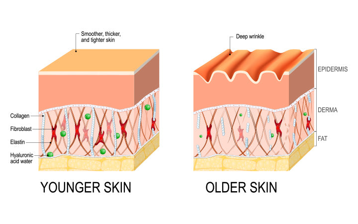 visual representation of skin changes over a lifetime