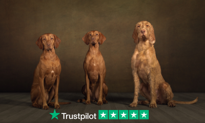 Reaching a landmark with a 1000 reviews on Trustpilot