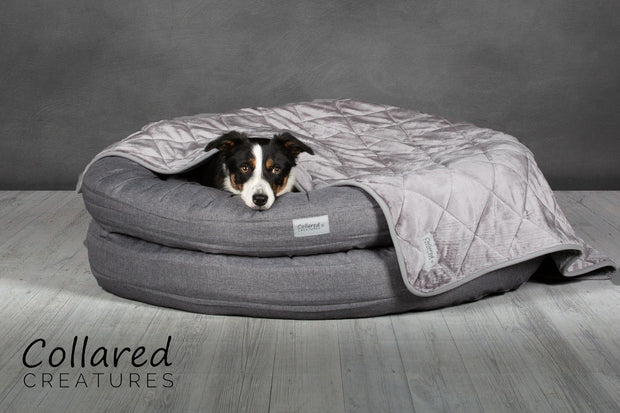 Grey Deluxe Donut Bed - Collared Creatures