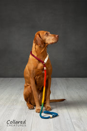 Rainbow Ombre Dip Dyed Dog lead, - Collared Creatures