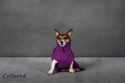 Magenta Perfectly Practical Dog Drying Coat - Collared Creatures