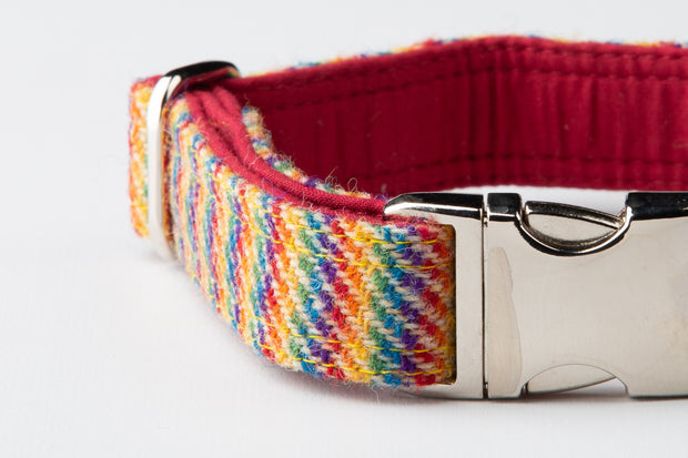 Rainbow Weave - Collared Creatures