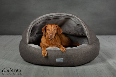 Ruby the Vizsla in a Collared Creatures Grey Deluxe Comfort Cocoon Dog Cave Bed
