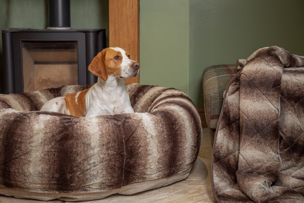Tan and white beagle laying in a collared creatures luxury brown faux fur donut dog bed with matching luxury brown faux fur dog blanket - sofa throw at the side