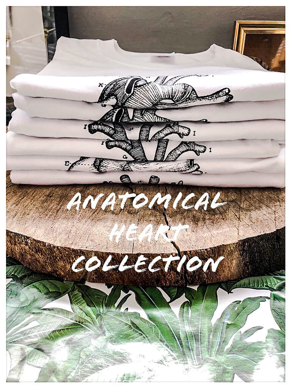 Anatomical Heart Collection.