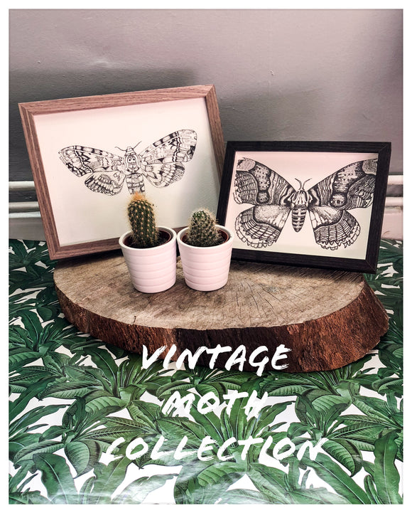 Vintage Moth Collection