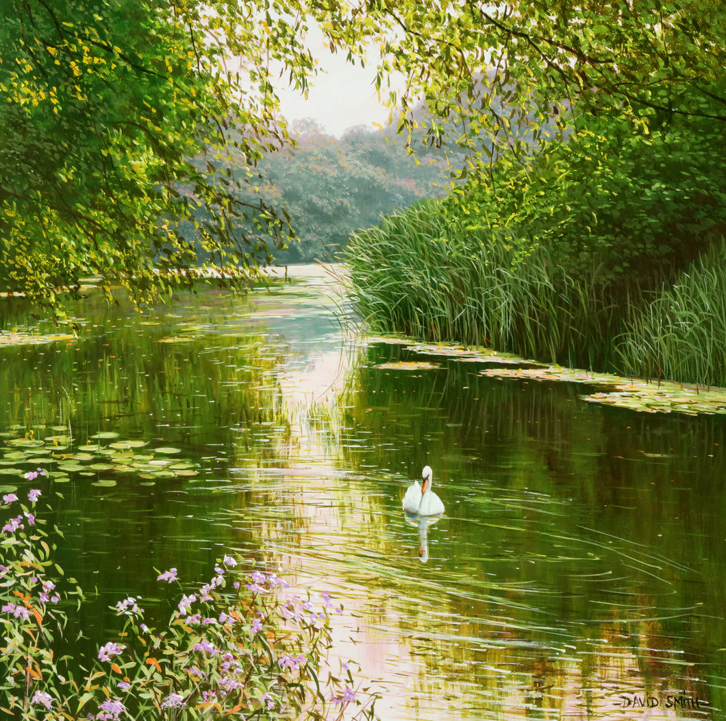 SWAN ON THE RIVER STORT - Open Edition Print