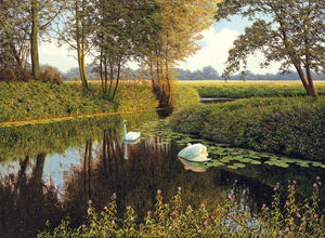 SWANS ON THE GIPPING - Limited Edition Print