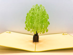 Pop-up Card _ Ginkgo Biloba