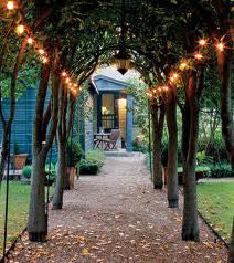 Aspen Brands String Lights  15ft with 15 Light Clear Bulbs
