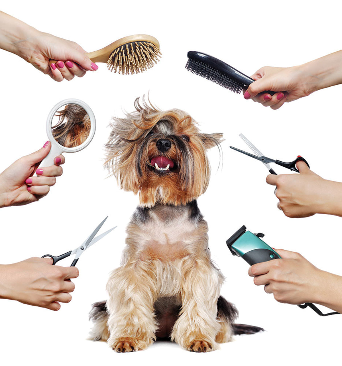 Pet Grooming Mistakes You Need To Avoid!