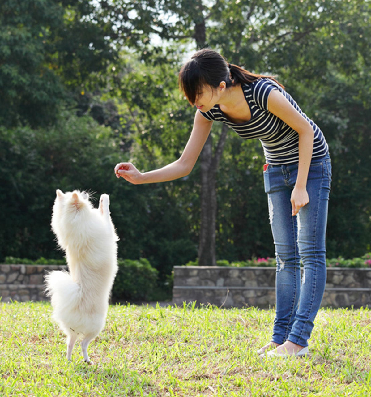 What Is The Best Dog Training Method