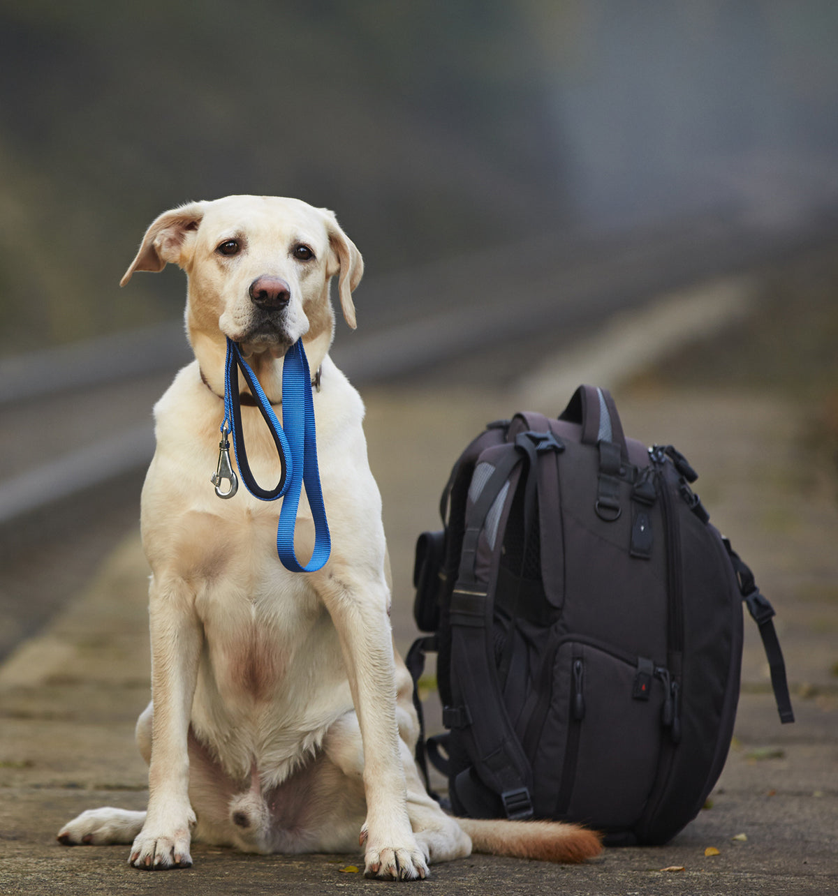 When You Travel With Your Doggo