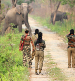 Man- Animal Conflict Still In Manas National Park